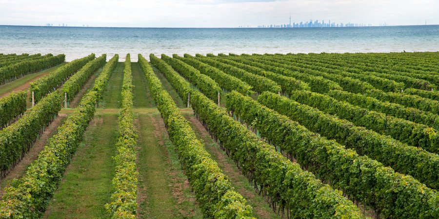Niagara's Only Lakefront Winery Located on the Shores of Lake Ontario